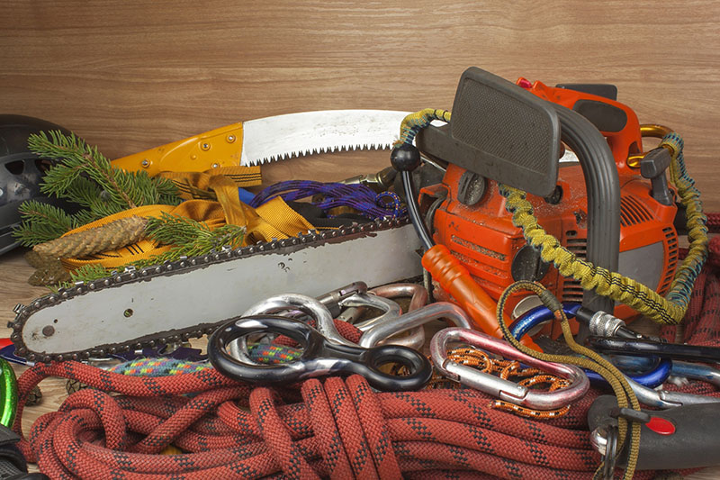 Adequate Tree Removal Tools and Expertise
