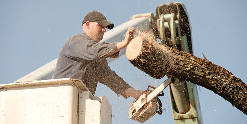 Contact JNE Tree Services