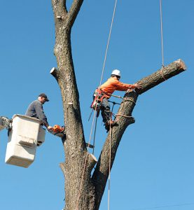 All Tree Removal Jobs are Different